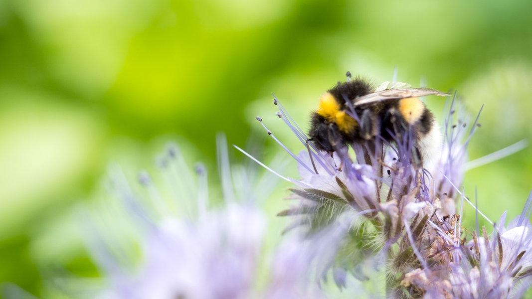NABU-Zählaktion: Bilanz zum Insektensommer 2019