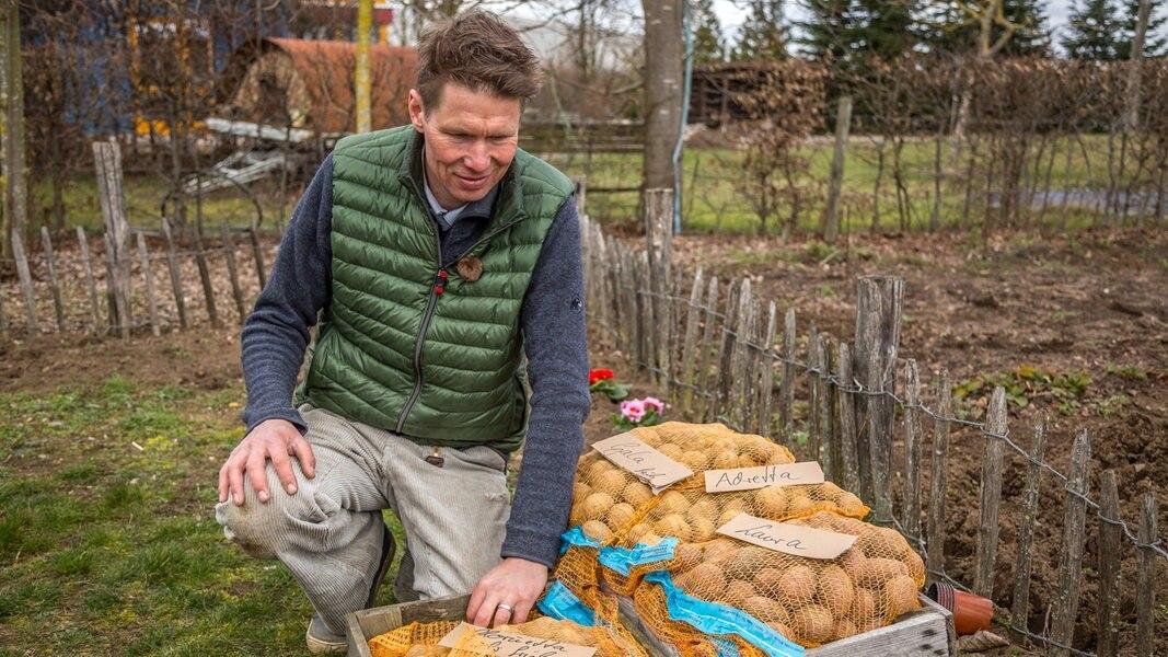 kartoffeln aussaat
