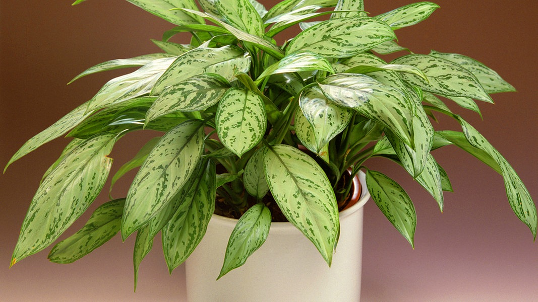 raumklima mit zimmerpflanzen verbessern ratgeber garten zimmerpflanzen. Black Bedroom Furniture Sets. Home Design Ideas