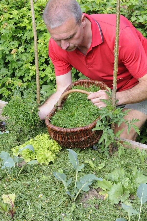 Mulchen Mit Rasenschnitt Und Rindenmulch Ndrde Ratgeber Garten