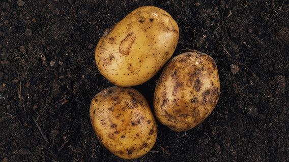 Drei Kartoffeln liegen auf der Erde. © colourbox