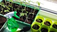 paprika ganz einfach selbst ziehen ratgeber garten nutzpflanzen. Black Bedroom Furniture Sets. Home Design Ideas