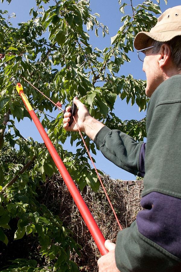 Gut bekannt Kirschbäume im Sommer schneiden | NDR.de - Ratgeber - Garten GF31