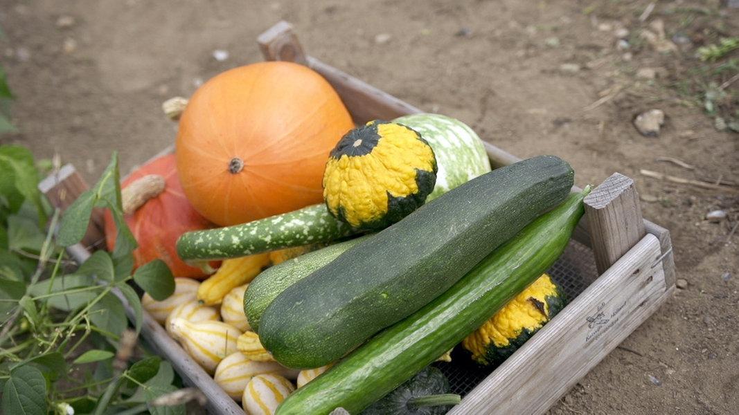 bitterer geschmack giftige stoffe in zucchini co ndr. Black Bedroom Furniture Sets. Home Design Ideas
