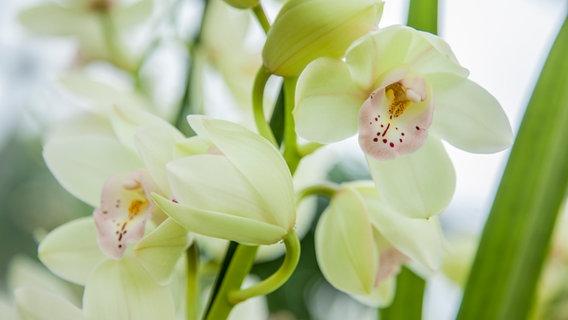 Orchideen Durch Den Winter Bringen Ndrde Ratgeber Garten