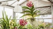 orchideen pflegen richtig gie en und d ngen ratgeber garten zimmerpflanzen. Black Bedroom Furniture Sets. Home Design Ideas