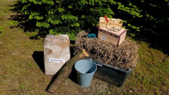 Gemeinsame Pilze im Garten züchten | NDR.de - Ratgeber - Garten @JP_55