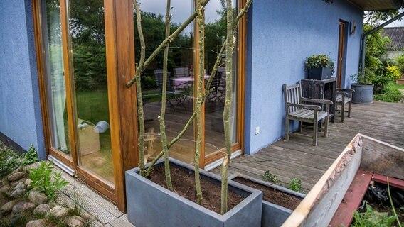 Sichtschutz auf dem Balkon durch Pflanzen   NDR.de ...