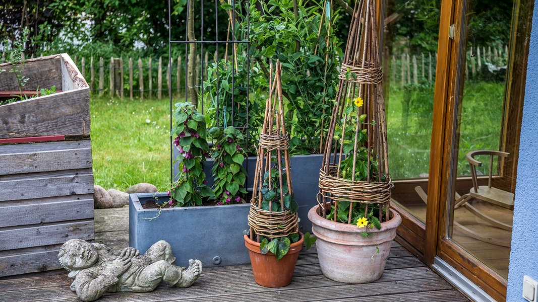 rankpflanzen als sichtschutz auf dem balkon ratgeber garten. Black Bedroom Furniture Sets. Home Design Ideas