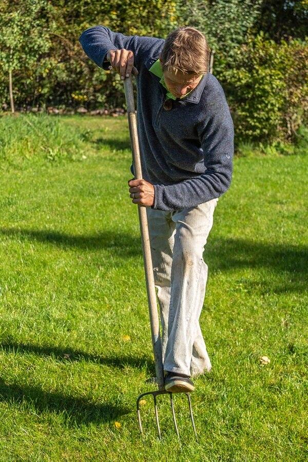 Gartentipps: Ginster-Schnitt und Rasenpflege