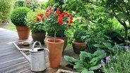 rosen im fr hjahr richtig schneiden ratgeber garten zierpflanzen. Black Bedroom Furniture Sets. Home Design Ideas