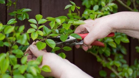 kletter und rankrosen pflanzen ratgeber garten zierpflanzen. Black Bedroom Furniture Sets. Home Design Ideas