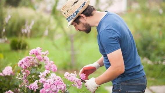 Gartentipps Fur Juni Ndr De Ratgeber Garten Gartenkalender