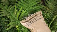 pflanzen nat rlich vor sch dlingen sch tzen. Black Bedroom Furniture Sets. Home Design Ideas