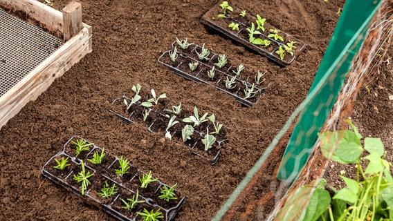 kr uter durch stecklinge vermehren ratgeber garten nutzpflanzen. Black Bedroom Furniture Sets. Home Design Ideas