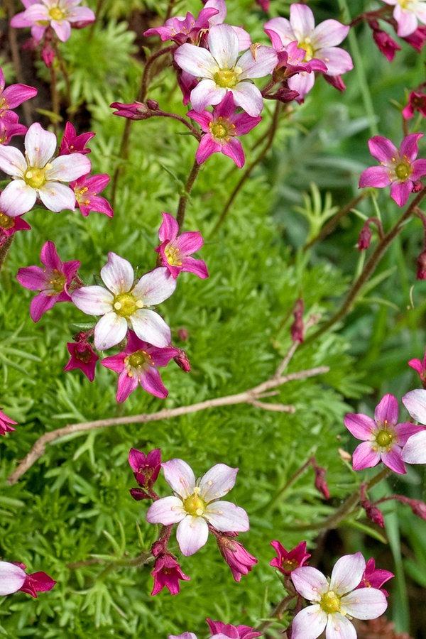 Stauden Im Frühjahr Pflanzen Pflegen Und Düngen Ndrde Ratgeber