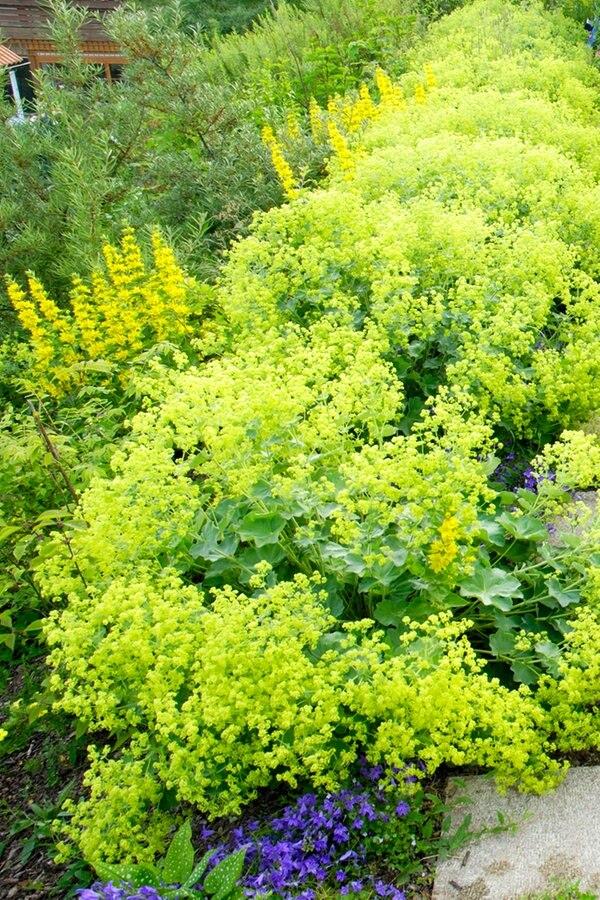 Einen Steingarten anlegen und bepflanzen | NDR.de - Ratgeber - Garten