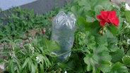 urlaubszeit so berleben pflanzen ohne wasser ratgeber garten. Black Bedroom Furniture Sets. Home Design Ideas