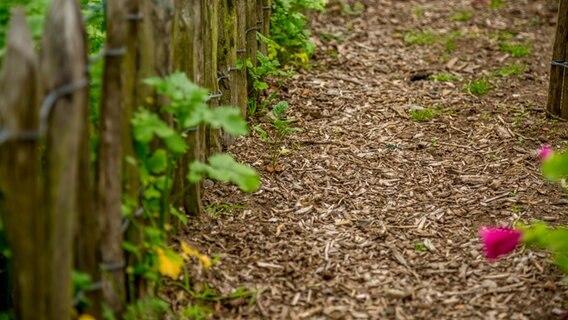 Neue Wege Fur Den Garten Anlegen Ndr De Ratgeber Garten
