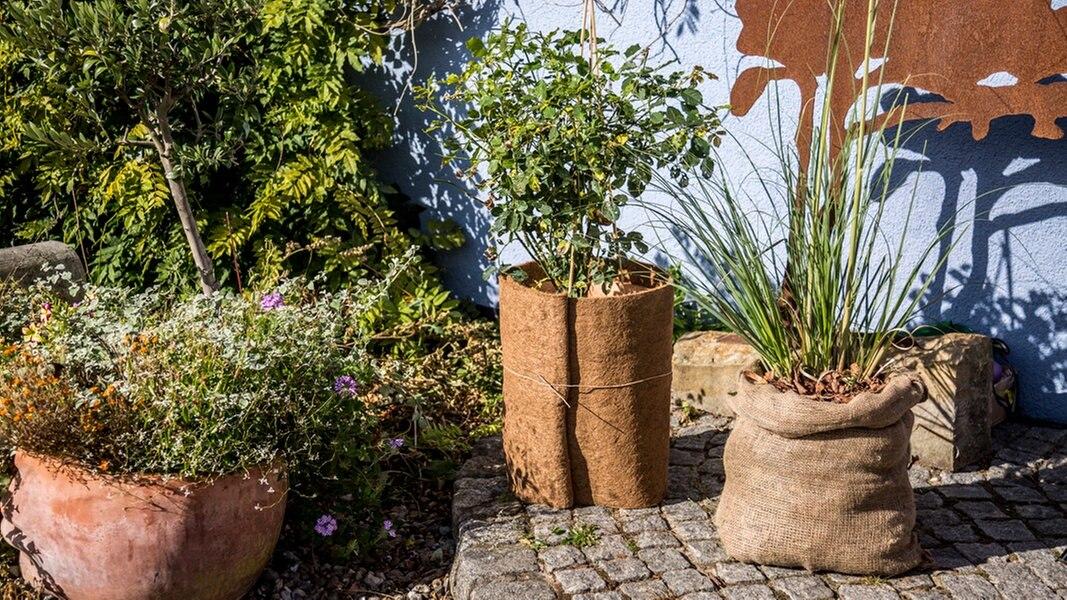 winterharte topfpflanzen vor k lte sch tzen ratgeber garten zierpflanzen. Black Bedroom Furniture Sets. Home Design Ideas