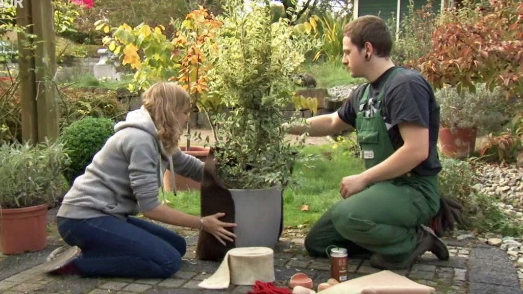 Kubelpflanzen Richtig Uberwintern Ndr De Ratgeber Garten