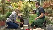 rosen schneiden d ngen und pflanzen ratgeber garten zierpflanzen. Black Bedroom Furniture Sets. Home Design Ideas