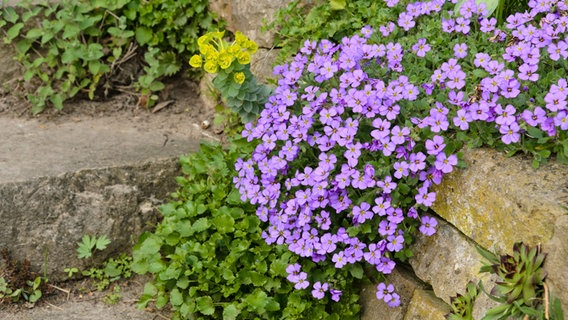 Einen Steingarten Anlegen Und Bepflanzen Ndrde Ratgeber Garten