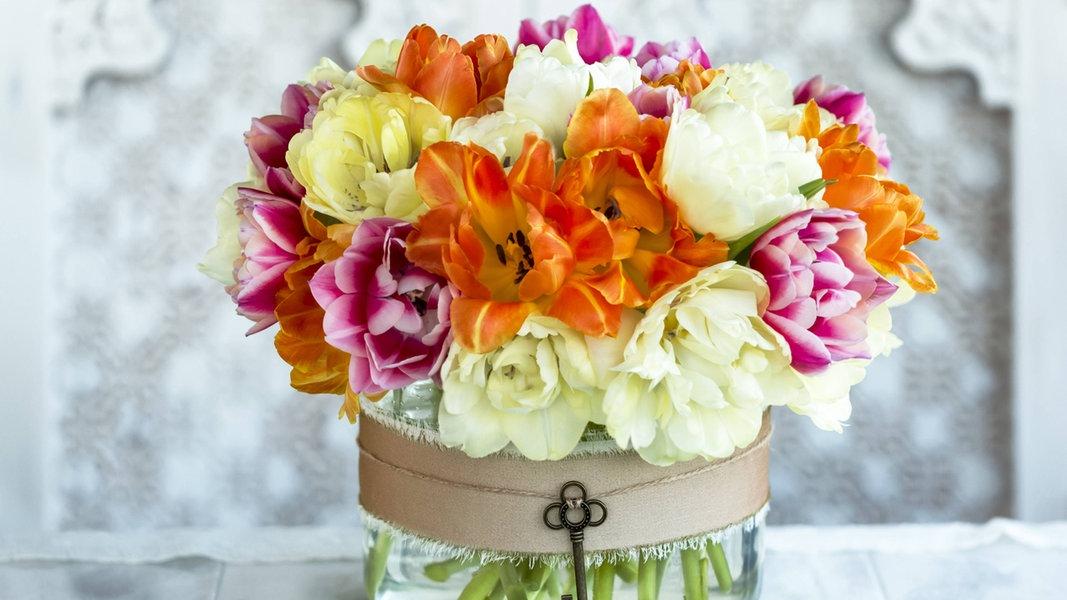So Bleiben Blumen In Der Vase Lange Frisch Ndr De Ratgeber Garten Zierpflanzen