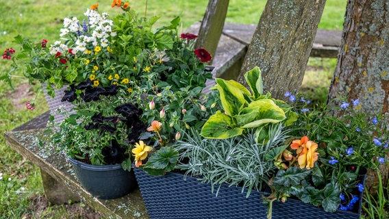 Kräuter, Blumen Und Gemüse Im Kübel Kombinieren