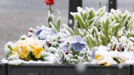 Fabelhaft Welche Balkonpflanzen vertragen Frost? | NDR.de - Ratgeber @PH_02
