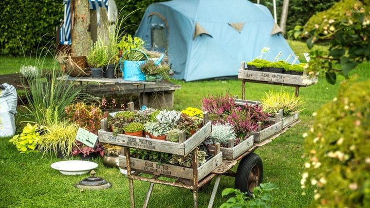 Ein Mit Blumen Bepflanzter Karren Steht In Einem Garten. © Ndr.de Fotograf: