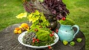 diy ideen f r kreative pflanzgef e ratgeber garten zierpflanzen. Black Bedroom Furniture Sets. Home Design Ideas