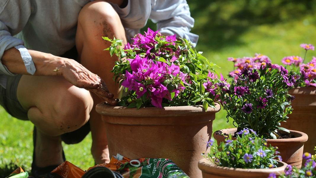 pflanzgef e welches eignet sich wof r ratgeber garten zierpflanzen. Black Bedroom Furniture Sets. Home Design Ideas