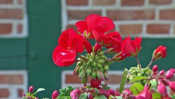 wie gut sind g nstige gartenblumen ratgeber garten zierpflanzen. Black Bedroom Furniture Sets. Home Design Ideas