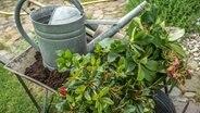 rhododendron pflegen und krankheiten erkennen. Black Bedroom Furniture Sets. Home Design Ideas