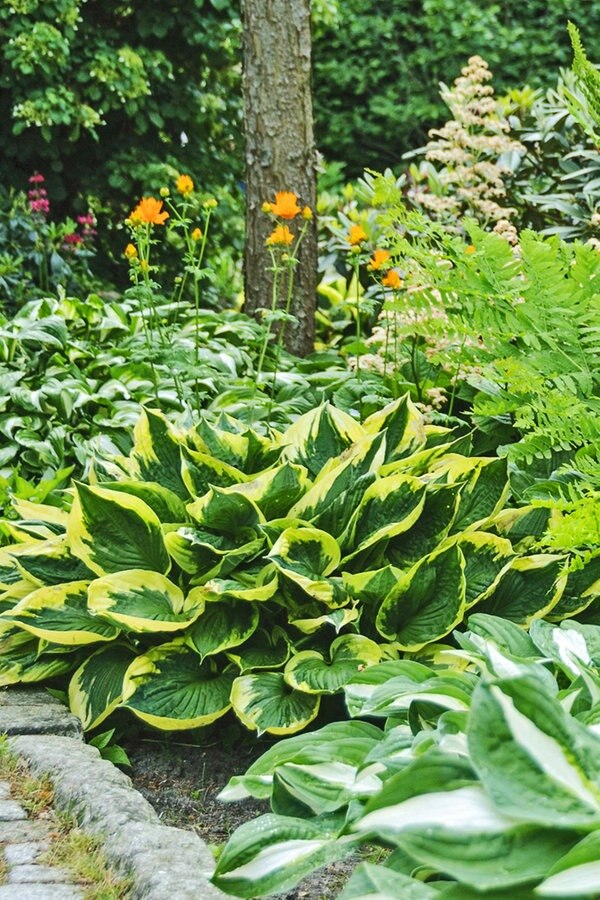 farne pflegen als zimmerpflanze und im garten ratgeber garten zierpflanzen. Black Bedroom Furniture Sets. Home Design Ideas