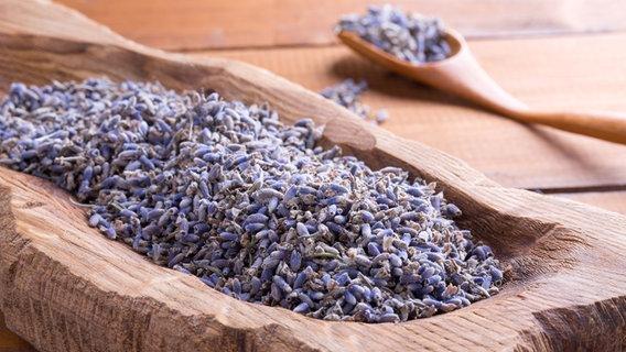 Lavendel Schneiden, Pflanzen Und Pflegen
