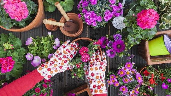 Blumenkästen Sommerblumen Für Sonne Und Schatten Ndrde