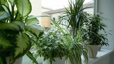 Pflanzen Badezimmer mit pflanzen das badezimmer begrünen ndr de ratgeber garten