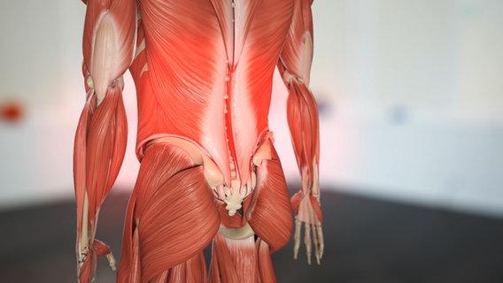 Verspannungen brustkorb lösen