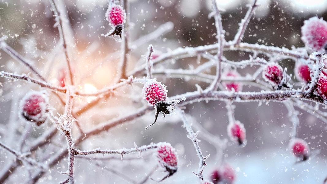 Den Garten Winterfest Machen Ndr De Ratgeber Garten