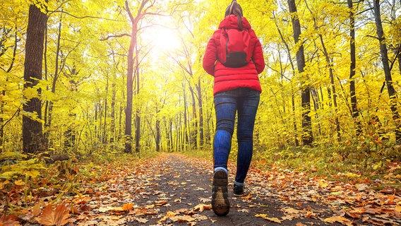 Frau wandert im herbstlichen Wald. © fotolia Fotograf: ruslan_khismatov
