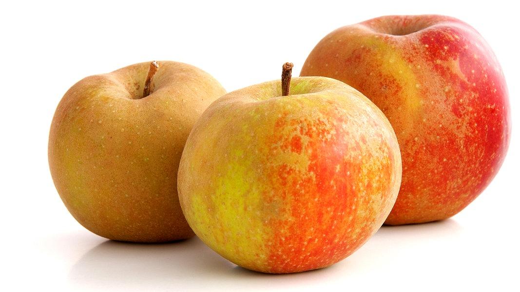 Gesunde Alte Apfelsorten Auch Fur Allergiker Ndr De Ratgeber