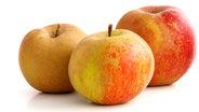 Drei Äpfel der Sorte Boskoop. © fotolia.com Photo: womue