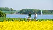 Zwei Radfahrer fahren durch ein blühendes Rapsfeld an der Schlei. © Ostseefjord Schlei GmbH Foto: Matzen