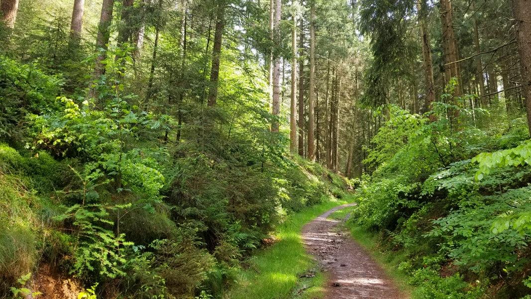 Wandern Harburger Berge