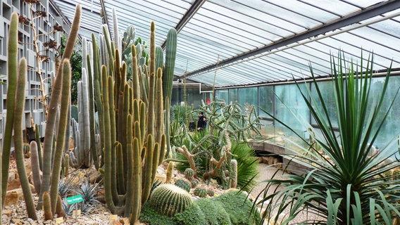 Die Tropengewachshauser In Planten Un Blomen Ndr De Ratgeber