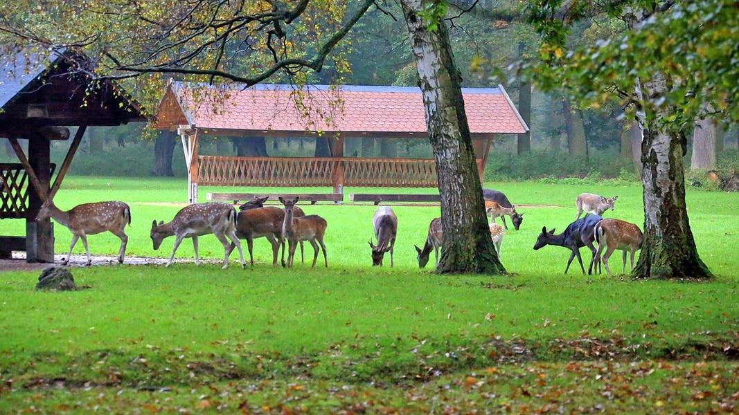 Tiergarten Hannover Eintrittspreise