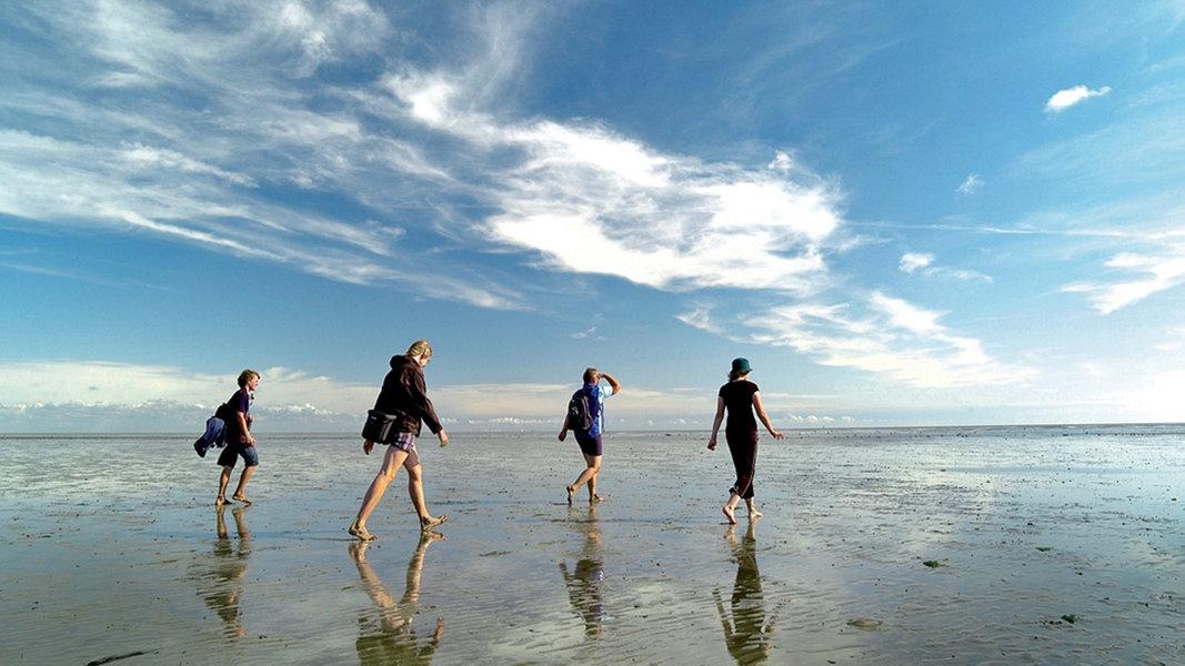 Das Wattenmeer: Zehn Jahre Weltnaturerbe