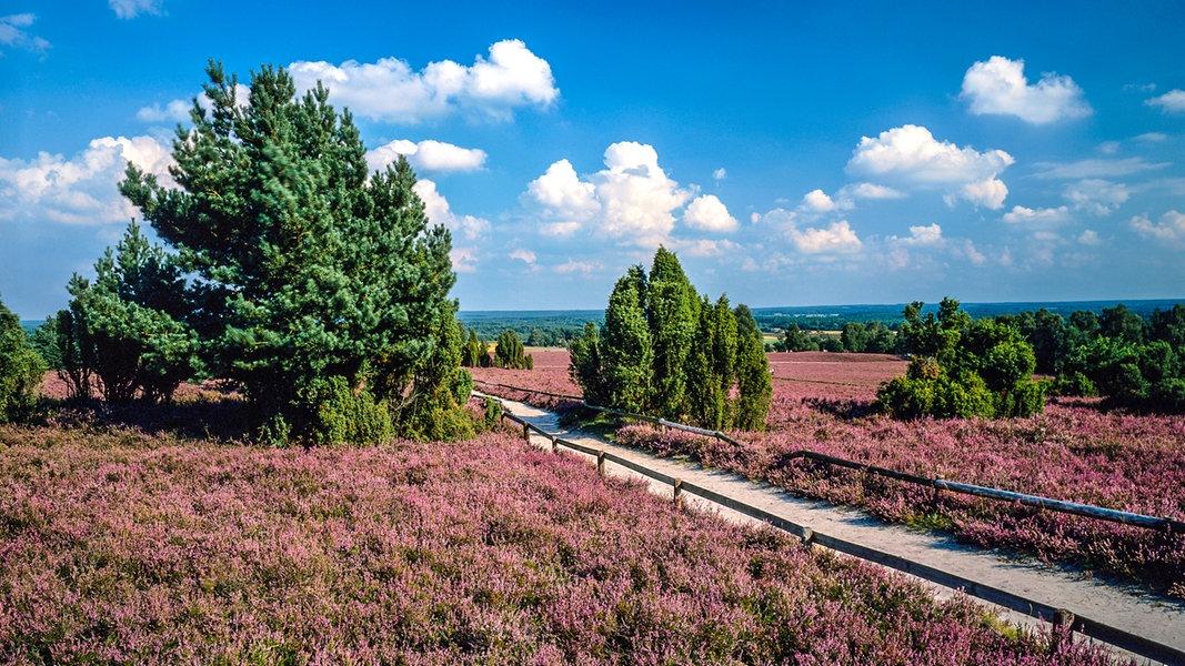 Karte Lüneburger Heide Und Umgebung.Blüte In Der Lüneburger Heide Ndr De Ratgeber Reise